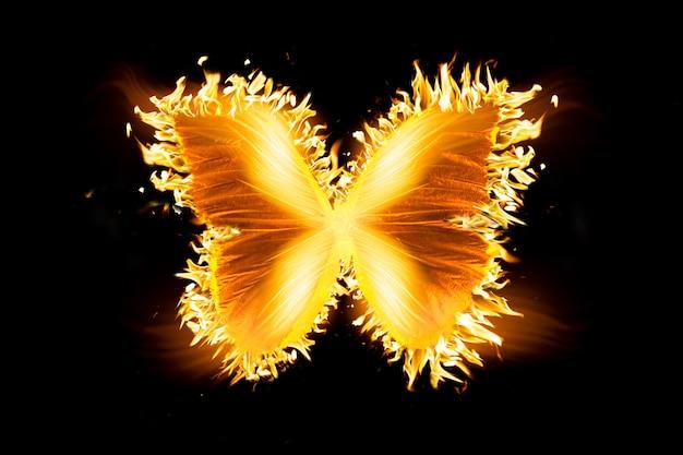 검은 배경에 고립 된 아름 다운 불 나비