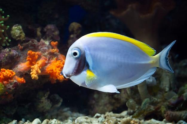 Красивая рыба на морском дне и коралловые рифы, подводная красота рыб и коралловые рифы.