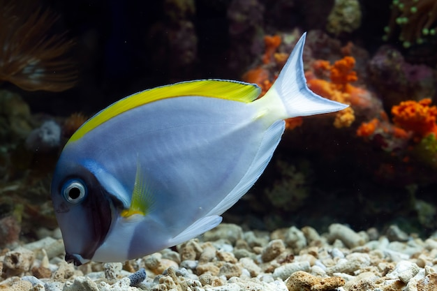 Beautiful fish on the seabed and coral reefs underwater beauty of fish and coral reefs