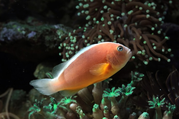 Beautiful fish on the seabed and coral reefs