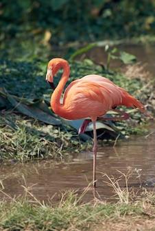 A beautiful flamingo in the suny