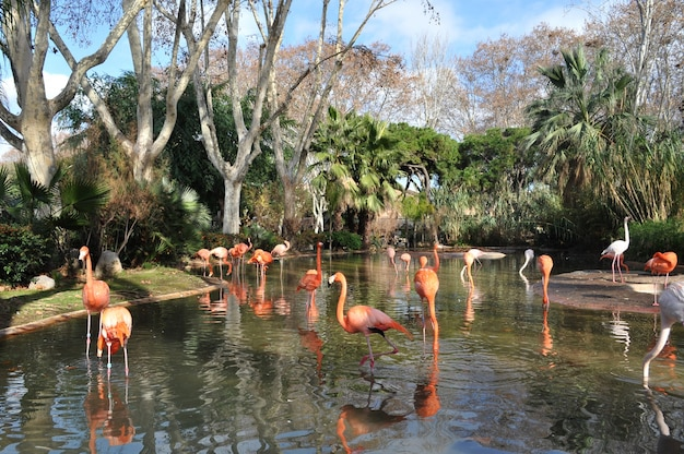 Beautiful flamingos in the zoo