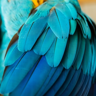 Beautiful flight feathers of a blue and gold macaw