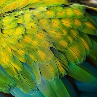 Красивые перья полета голубого и золотого ара