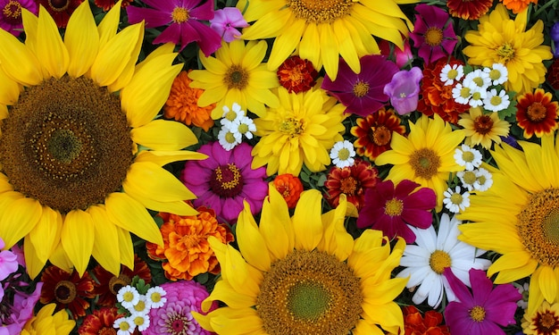 Beautiful floral background. garden flowers, top view. sunflowers and daisies.