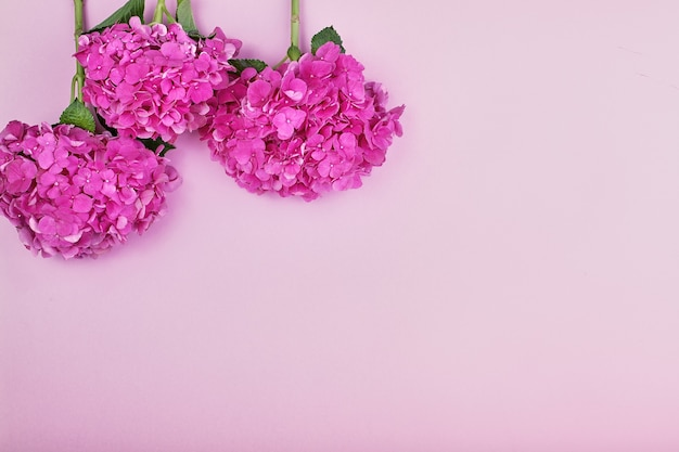Beautiful floral background and green leaves, texture, wallpaper