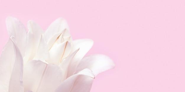 Красивый цветочный баннер с белой лилией пиона. лепестки нежного цветка заделывают.