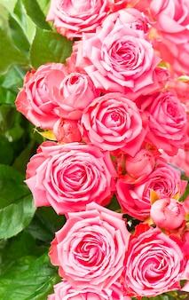 美しい花の花の背景-ピンクのバラの花の花束の背景