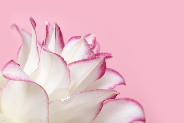 Красивая цветочная открытка с белой лилией пиона. лепестки нежного цветка заделывают. естественный цветочный фон.
