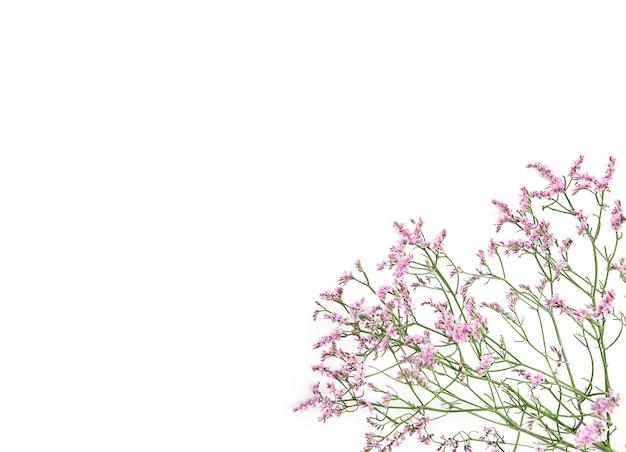Красивый цветочный фон из цветов гипсофилы.