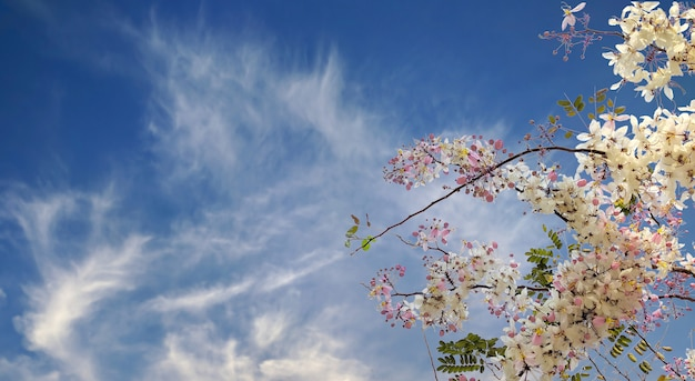 Beautiful flower on blue sky background