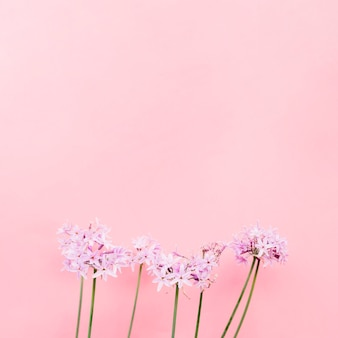 Beautiful flower bunch in front of pink wall