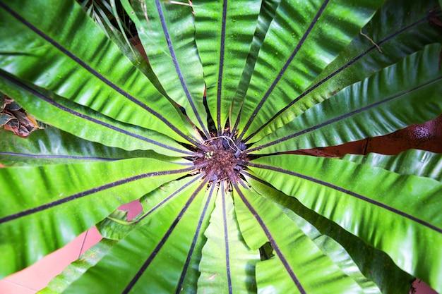 아름 다운 꽃, 실론 열 대 식물 상위 뷰. 스리랑카 자연 풍경