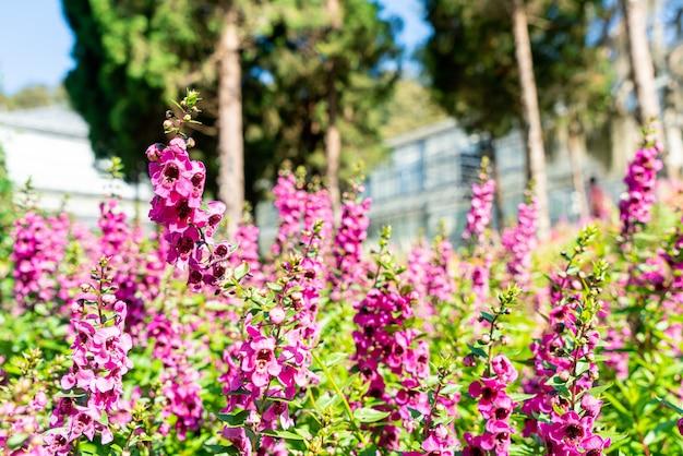 가정 정원에서 아름다운 꽃 장식