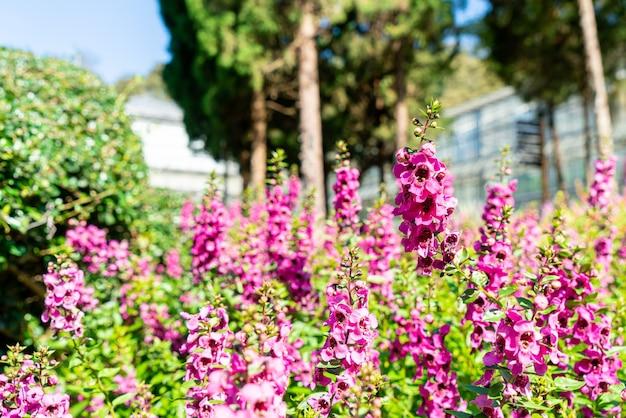 집 정원의 아름다운 꽃 장식