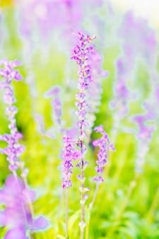 美しい花ハーブ植物風景
