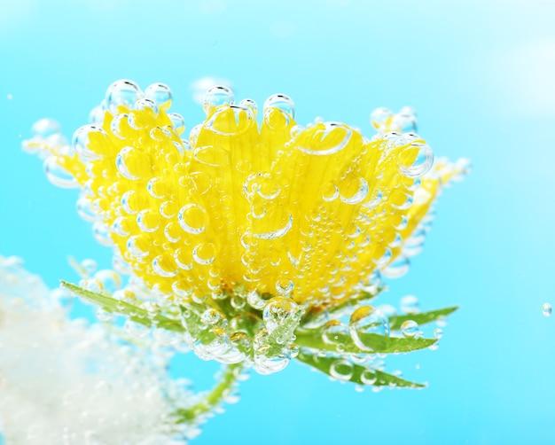 파란색 배경에 반짝이는 물에 있는 아름다운 꽃, 클로즈업