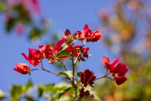 自然の中の美しい花