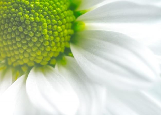 Beautiful flower in macro closeup. pastel color.