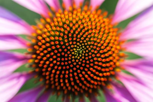 美しい花をクローズアップで撮影