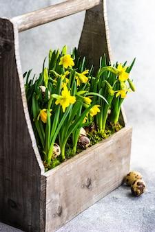 Красивый цветочный горшок с желтыми нарциссами и перепелиными яйцами как весенняя интерьерная композиция