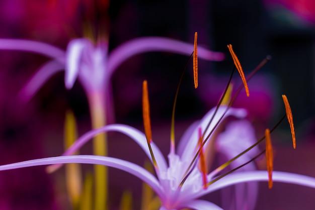 Beautiful flower in purple color, macro photo