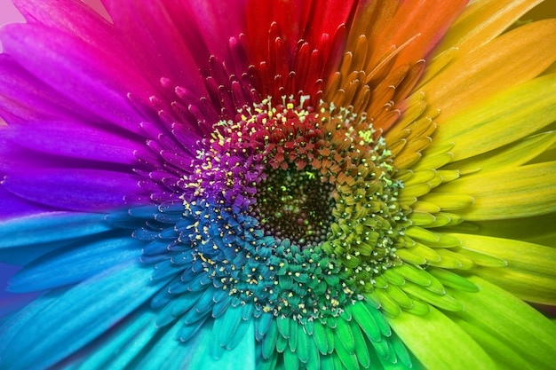 Красивый цветок с цветными лепестками крупным планом