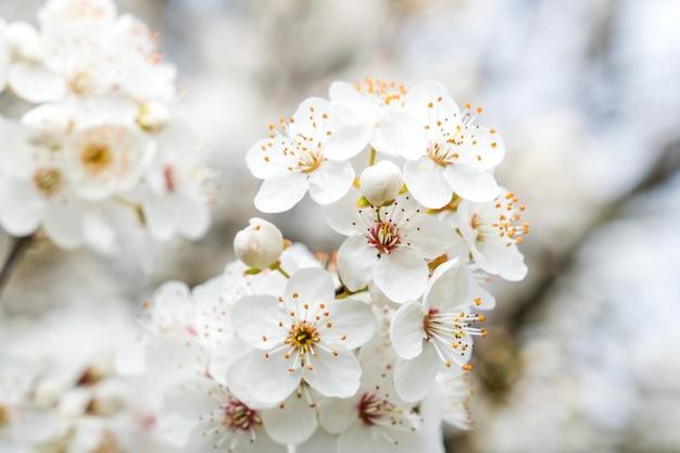 春の日に咲く花と美しい開花梅の木