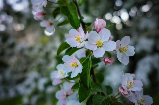 Красиво цветущие деревья в самом центре варшавы.