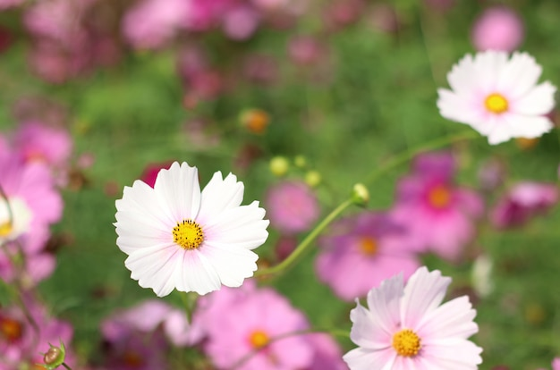Beautiful flowers are blooming in the nature