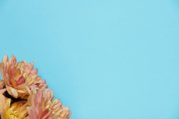 Beautiful flowers on blue background copy space