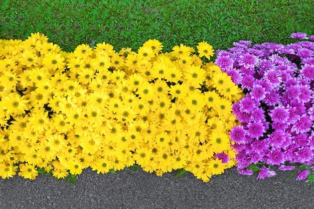 Красивые цветы красочные цветущие в весенний сезон в садовом парке азиатском стиле