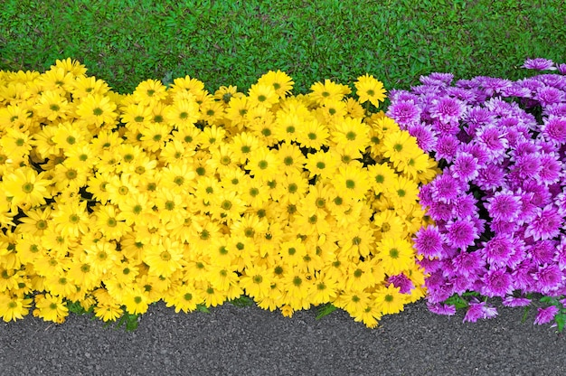 Beautiful flowers colorful blooming in spring season in garden park asian style