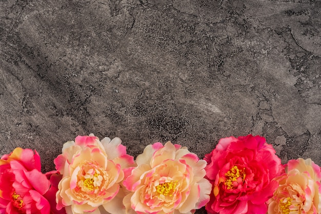 Beautiful flowers on a concrete background