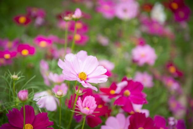 Красивые цветы в саду для фона