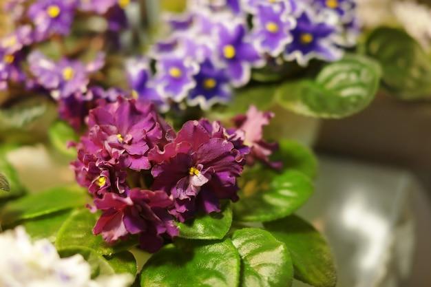 Defocused 자연에가 게에서 아름 다운 꽃