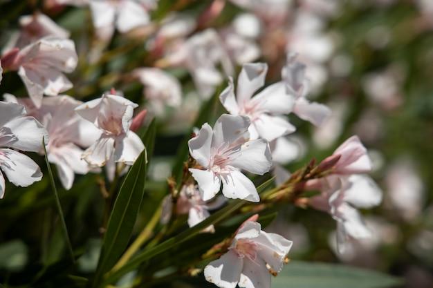 自然の中で美しい花