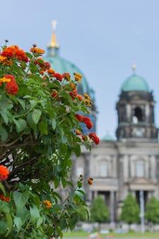 공원 lustgarten의 아름다운 꽃, 독일 박물관 섬의 베를린 돔보기
