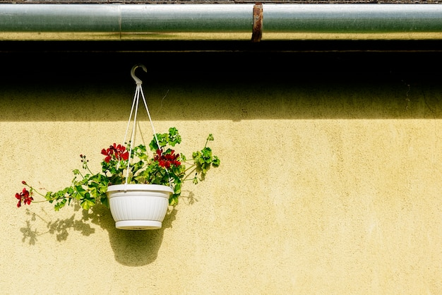 Beautiful flowers is hanging in a pot in outdoor for home decoration. flowers concept.