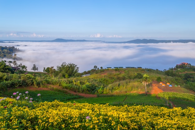 Beautiful flowers and mist at khao kho, thailand