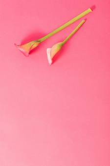 종이 바탕에 칼라 릴리의 아름 다운 꽃