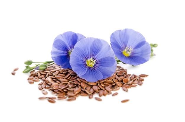 Красивые цветы льна с семенами
