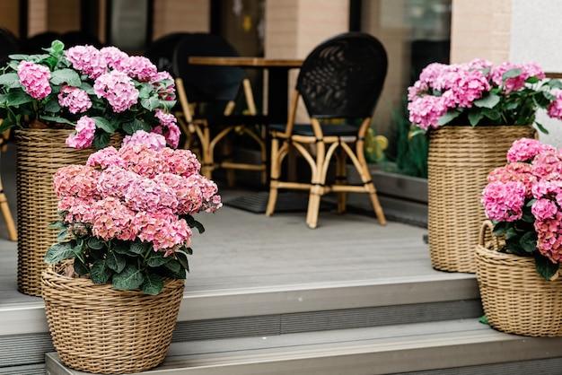 レストラン、フラワーショップのファサードの階段にある籐の植木鉢にピンクのアジサイの美しい花。園芸。ソフトセレクティブフォーカス。