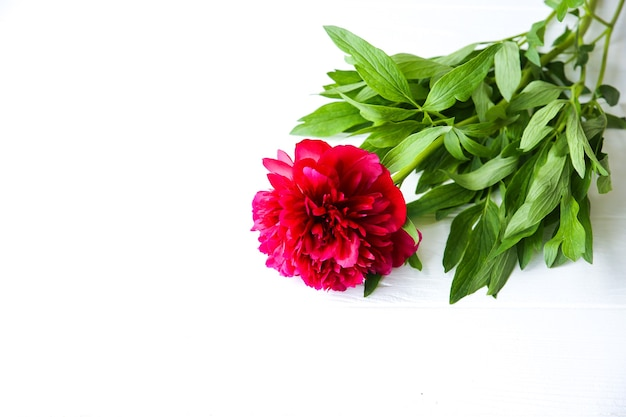 흰색 바탕에 아름 다운 꽃입니다. 모란 꽃다발. 완벽한 플랫 레이. 해피 어머니의 휴일 엽서입니다. 국제 여성의 날 인사말. 광고 또는 판촉을 위한 생일 아이디어.