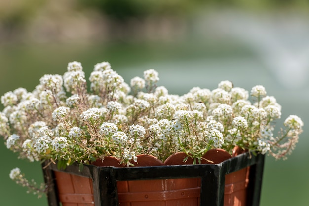 Beautiful flowers in pot, outdoors, selective focus