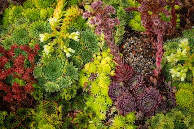 Sissinghurst caslte gardens의 아름다운 꽃, 나무 및 식물 및 정원 조경