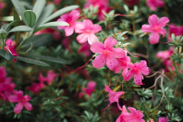 緑の葉と美しい花がクローズアップ