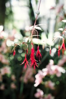 緑の葉と美しい花がクローズアップ Premium写真