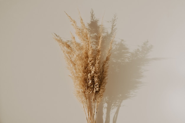 Beautiful fluffuy reeds bouquet on table. minimalist concept, trendy colors, boho style