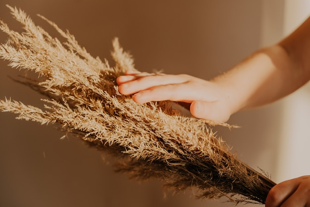Beautiful fluffuy reeds in child hand. minimalist blogger concept, trendy colors, boho style